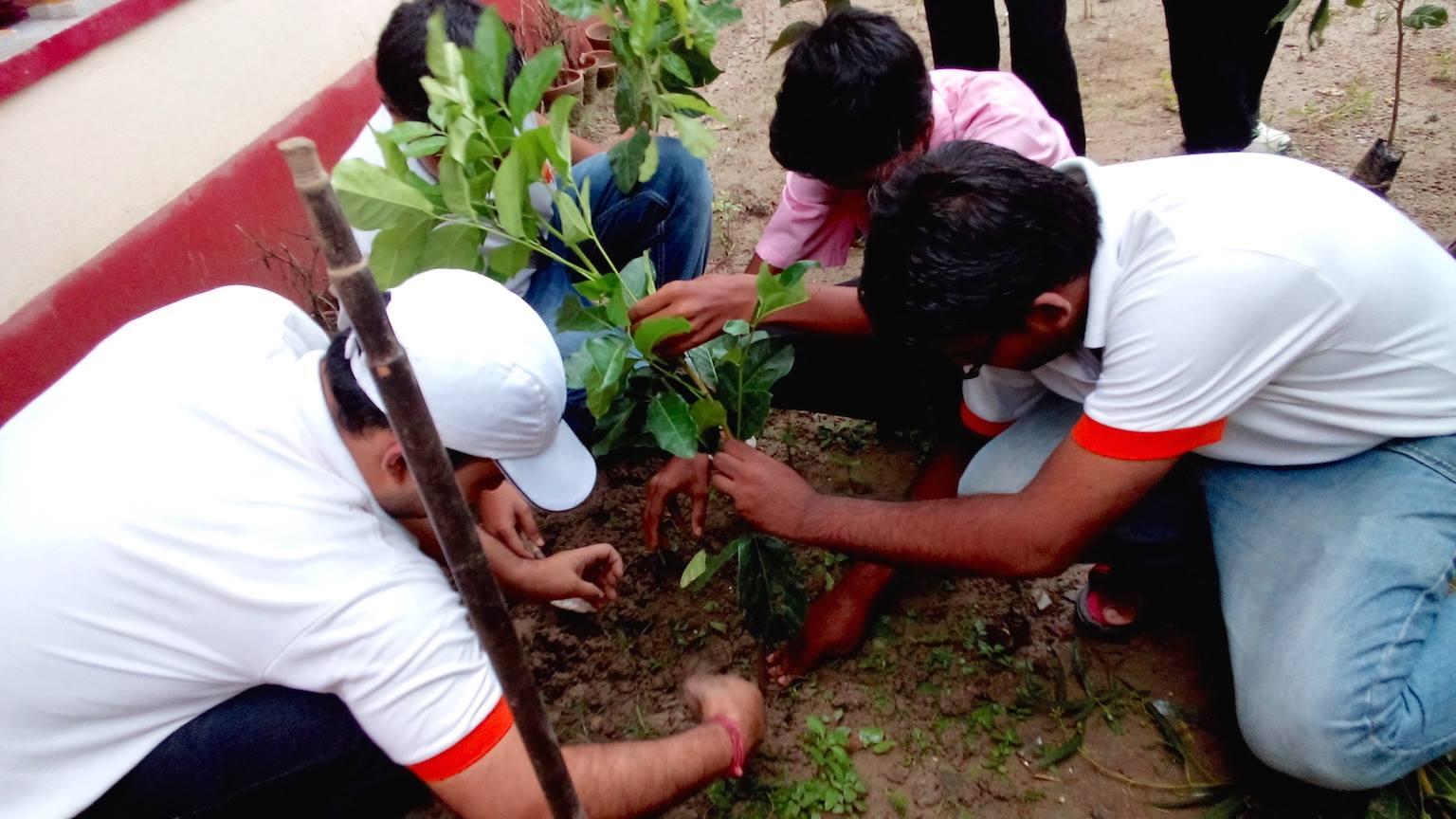 Close to 950 saplings will be planted