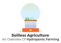 An analysis of hydroponic farming